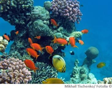Rotes Meer Wasserqualitaet