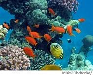 Rotes Meer Wasserqualität