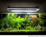 Aquarium Wasserqualität